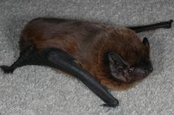 leislers-bat-phil-richardson