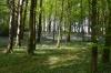 Liscongill wood