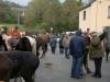 Newmarket Horse Fair October